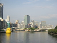 Floating Duck at 八軒家浜